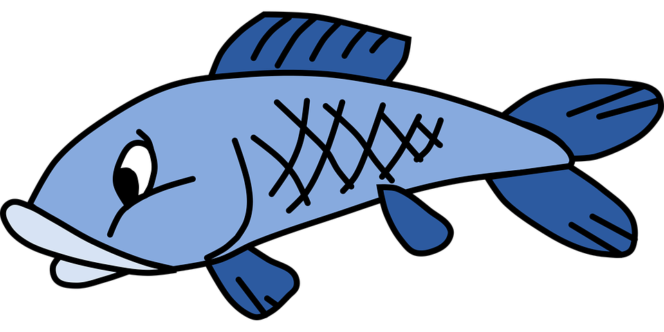 Apelación: 3 consejos de pesca (dados por el pez)